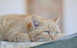 Глисты у кошек и собак – как вывести паразитов быстро и эффективно?