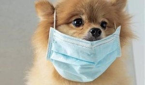 Рекомендации по выгулу собак или как избежать коронавируса COVID-19?