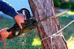 Спил старых и аварийных деревьев в Вологде