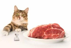 Чем и как кормить животных?