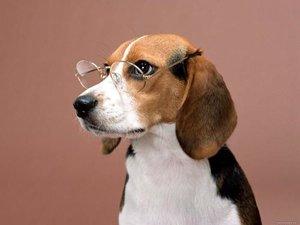 Как сохранить зрение питомца?