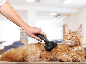 Груминг кошек: ответы на важные вопросы!