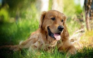 """""""Летние"""" болезни у домашних животных - как помочь питомцу?"""