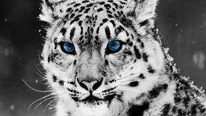 25 невероятных фактов о домашних и диких животных