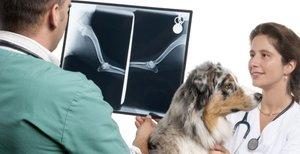 Рентген собаке в Череповце