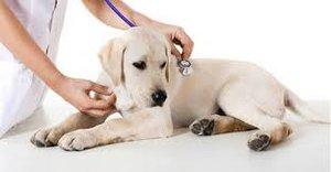 Ветеринарная клиника в Оренбурге
