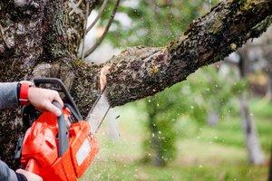 Кронирование деревьев в Вологде