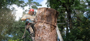 Как убрать дерево на территории