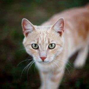 Котик после укуса собаки. Обратились с жалобами на отсутствие опороспособности на левую переднюю и задние лапы