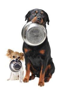 Кормление собак - важные принципы и запреты!