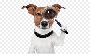Розыск домашних животных в Красноярске