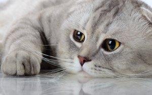 Инфекционные заболевания кошек - основные признаки заражения