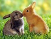 Кастрация кроликов в Туле - что нужно знать хозяину?