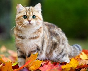 Стерилизация кошек - прихоть владельца или необходимость?