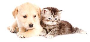 Качественная стерилизация кошек и собак Череповец