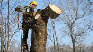 Заказать работы по кронированию деревьев в Вологде