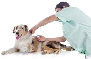 Где делают прививки собакам в Череповце?