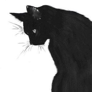 Случай из практики: Пациент кошка. Обратились с жалобами на хромоту на заднюю правую лапу