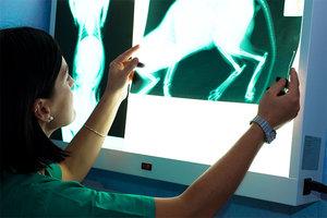Рентген животных в Череповце