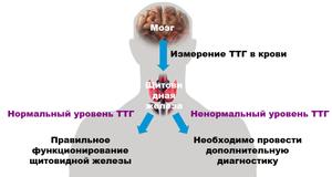 Анализ крови на ТТГ