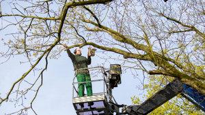 Кронирование деревьев – работа для профессионалов