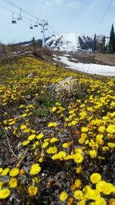 До лета осталось 20 дней, а весна только добралась до Шерегеша.