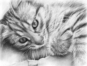 Случаи из практики: Котёнку был поставлен диагноз - перелом левого и правого бедра, остеодистрофия.