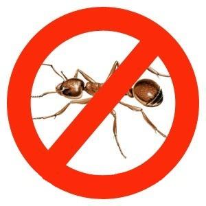 Комнатные муравьи