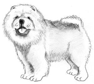 Собака четырёх лет с хронической хромотой на правую тазовую конечность