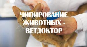 Чипирование животных в Оренбурге - Ветдоктор