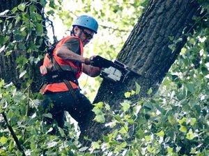 Санитарное кронирование деревьев в Вологде