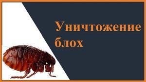 Обработки подвалов от БЛОХ. Уничтожение блох в Вологде.