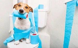 Диарея у собаки: основные причины появления и лечение