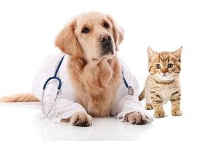 Ветеринарная клиника в Оренбурге - Ветдоктор