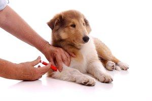 Сделать прививки собаке в Череповце