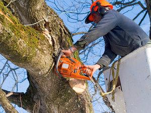 Заказать услуги по спилу деревьев в Вологде