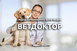 Выезд ветеринарного врача - Ветдоктор
