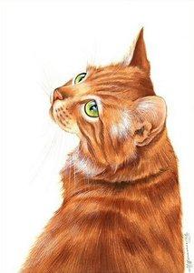 Случаи из практики: В нашу клинику обратились с котом с диагнозом перелом правой голени