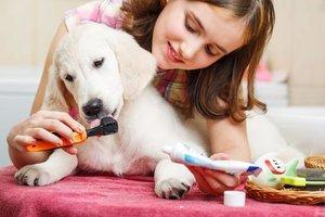 Чистка зубов у собак – особенности процедуры