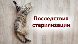 Стерилизация кошек и кастрация котов, вред или польза?
