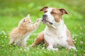 За и против: стерилизация собак и кошек