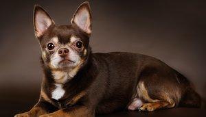Случаи из практики: собака с хронической хромотой на правую заднюю лапу.