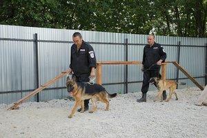 Дрессировка служебных собак.