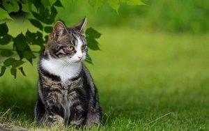Гельминтоз у кошек: симптомы, признаки, лекарства для лечения