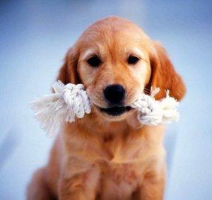 Своевременная терапия животных - залог здоровья Вашего любимца!