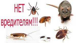 Оказываем услуги по уничтожению всех видов грызунов и насекомых