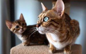 Панлейкопения или кошачья чума - чем опасно заболевание?