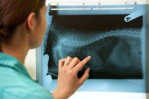 Где сделать рентген животным в Череповце