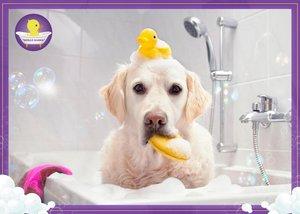 Какой материал лучше выбрать для реставрации ванны, если в доме есть собаки?