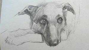 Случаи из практики: Застарелый перелом костей правого предплечья у собаки